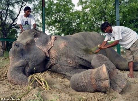 Penyelamatan Raju