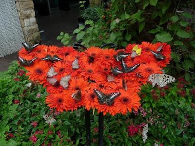 Vườn quốc côn trùng
