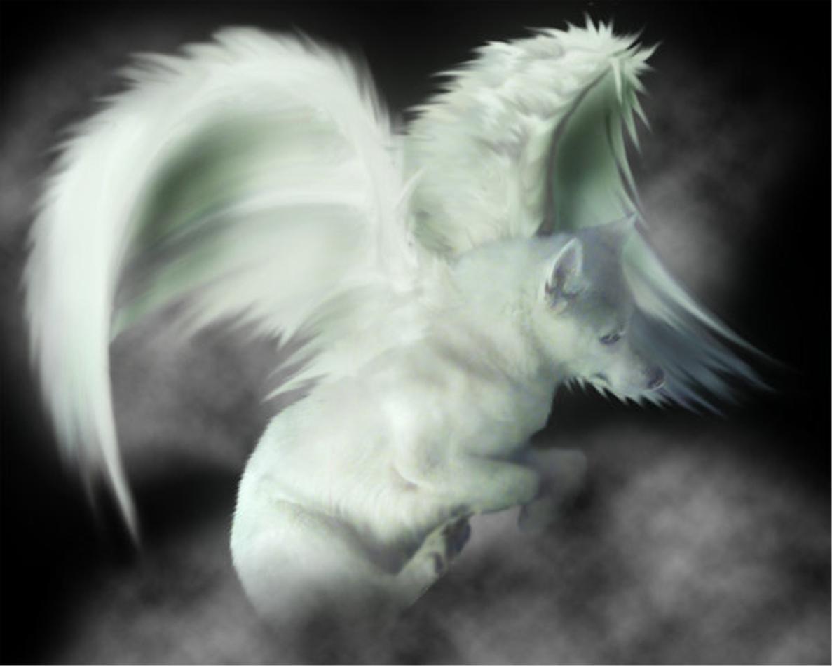 Wolf Anime Wallpaper | Fun Animals Wiki, Videos, Pictures ...