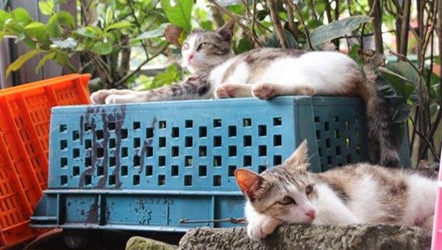 Yuk, Mengintip Desa Houtong di Taiwan yang Penuh dengan Kucing