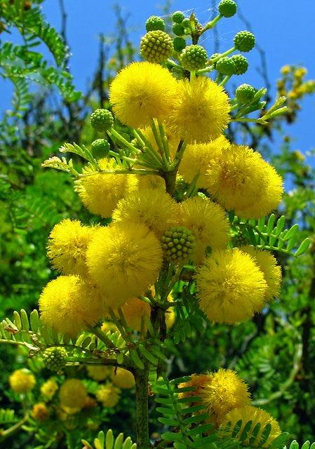 Flowers gardens flower season - Trees that bloom yellow flowers ...