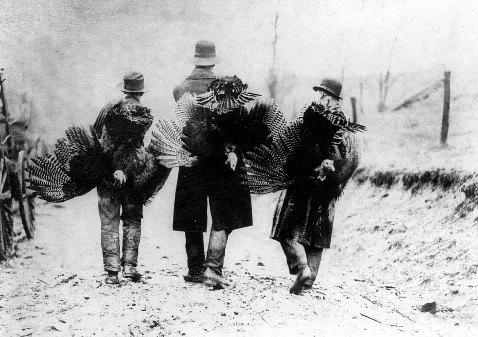 Thanksgiving Turkeys after Raffle
