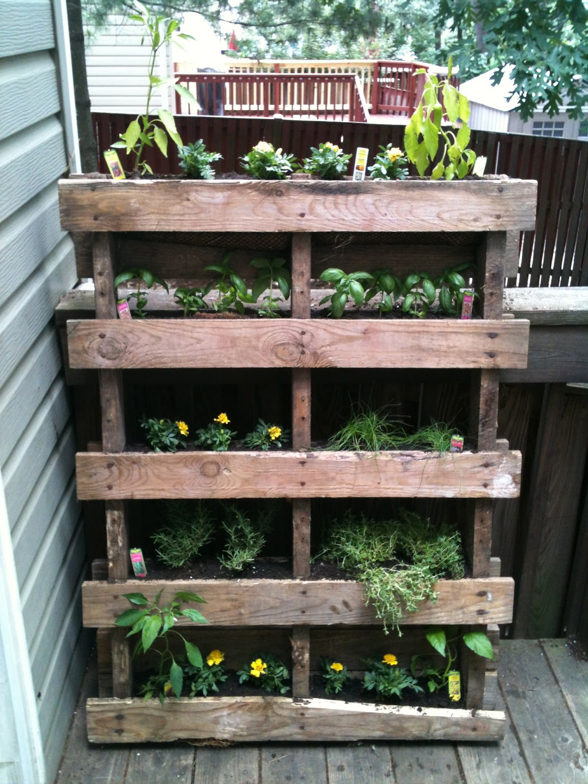 For kids giggles vertical pallet garden project for Vertical pallet garden