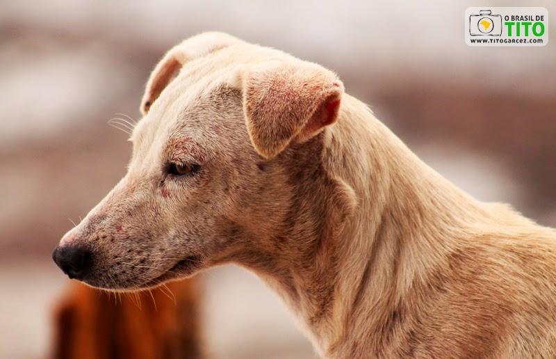 Cachorro no Porto de Marudá, em Marapanim, no Pará