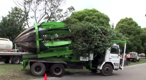 Como mudar uma árvore de lugar