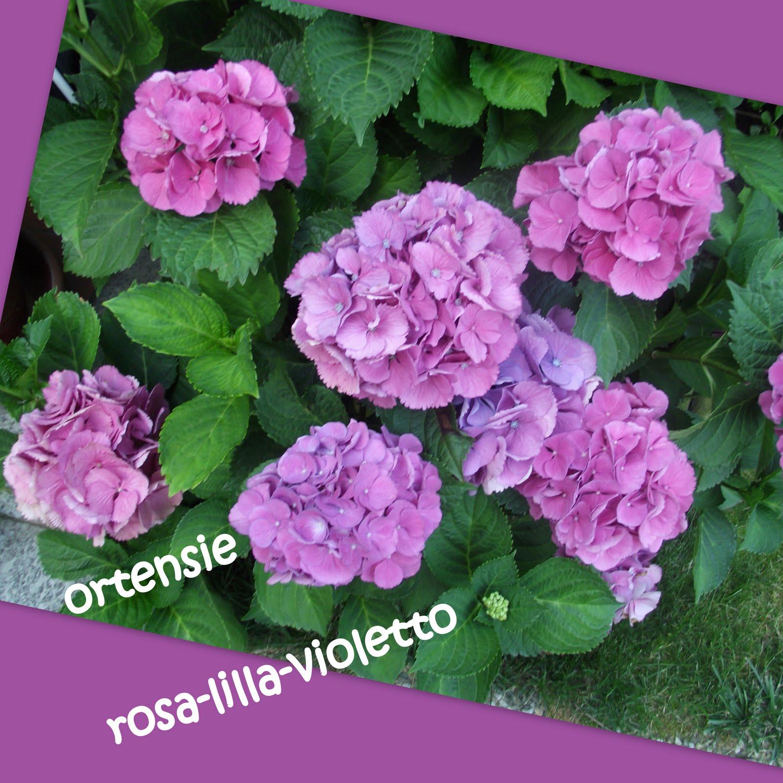 La scuola in cartella colori e fiori - Ortensie colori ...
