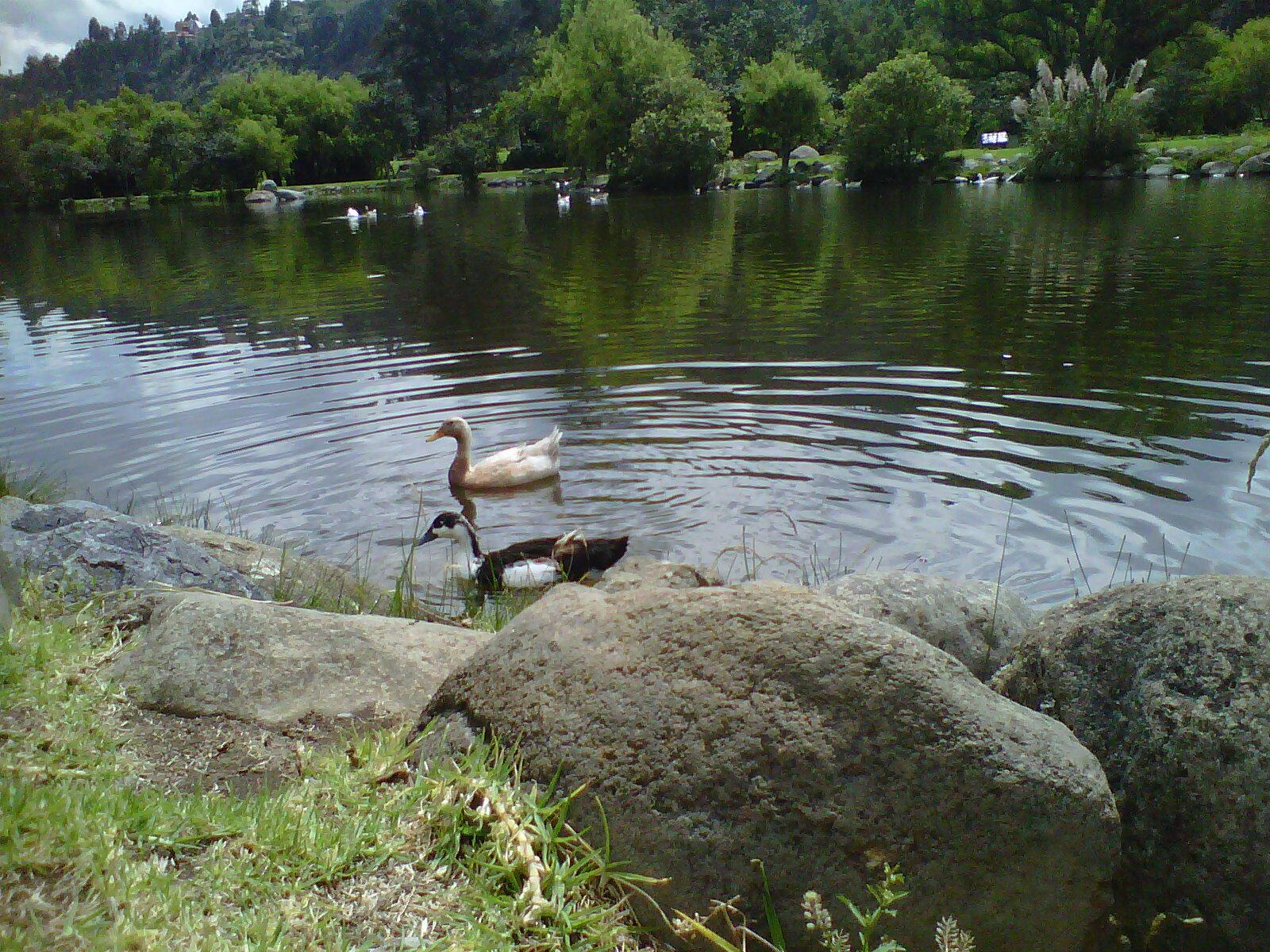 Una mirada a cuenca parque el para so for Como hacer una laguna artificial
