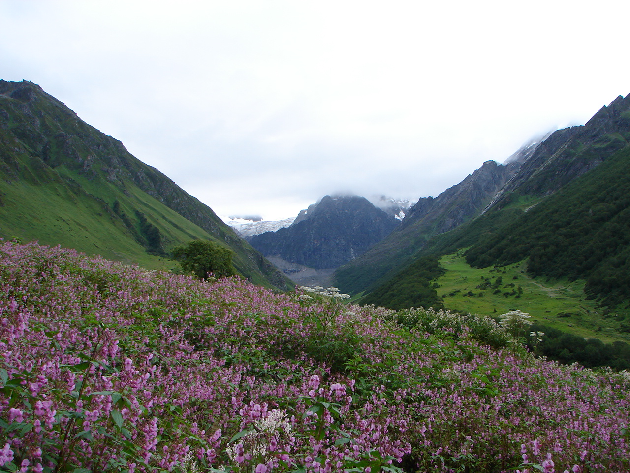 Just For You Valley of Flowers The Trekkers Heaven