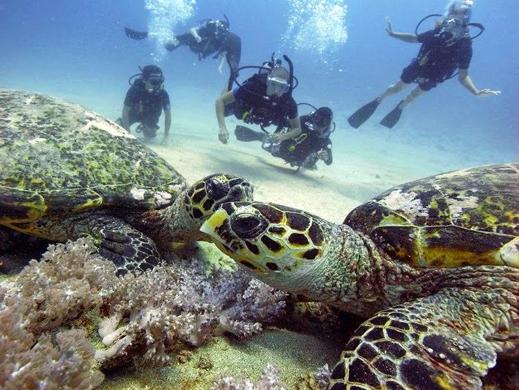 Pulau dengan pantai terindah di indonesia gili trawangan travel - Manta dive gili ...