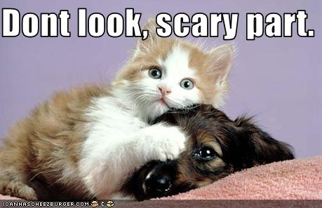 Funny Pictures Kitten And Puppy Watch Scary Movie Together