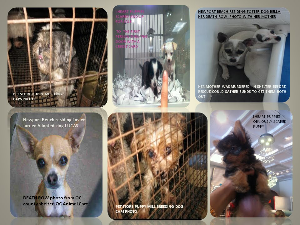 THE MANY VICTIMS OF PUPPY MILLS