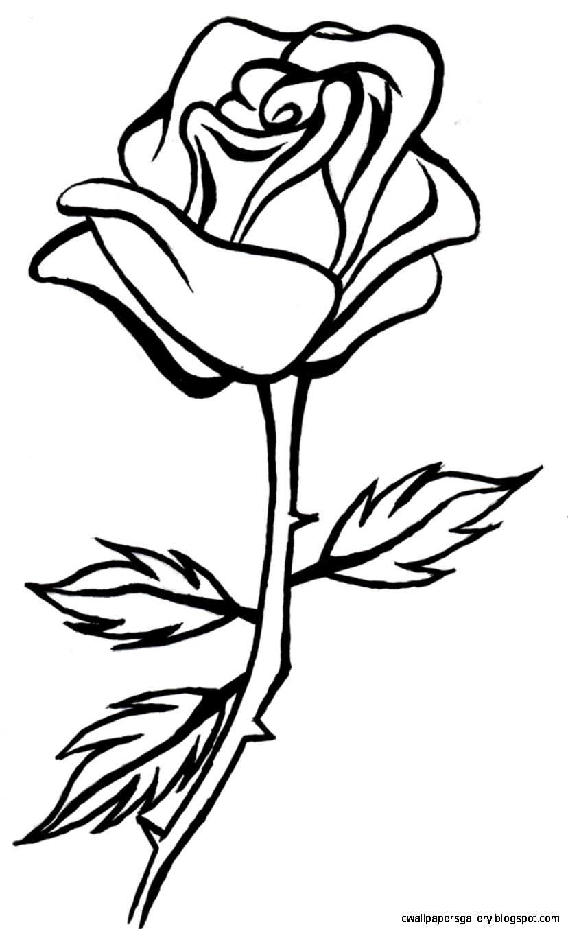 Roses free rose clipart animations and vectors   Clipartix