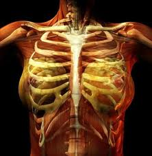 Pain in chest after fall Injuries, Fractures and Burns