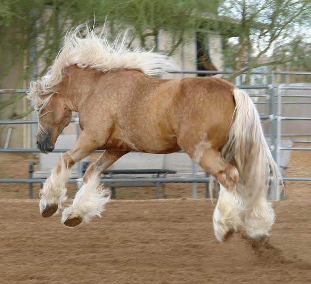 очень красивое фото лошади