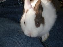 My bunny: