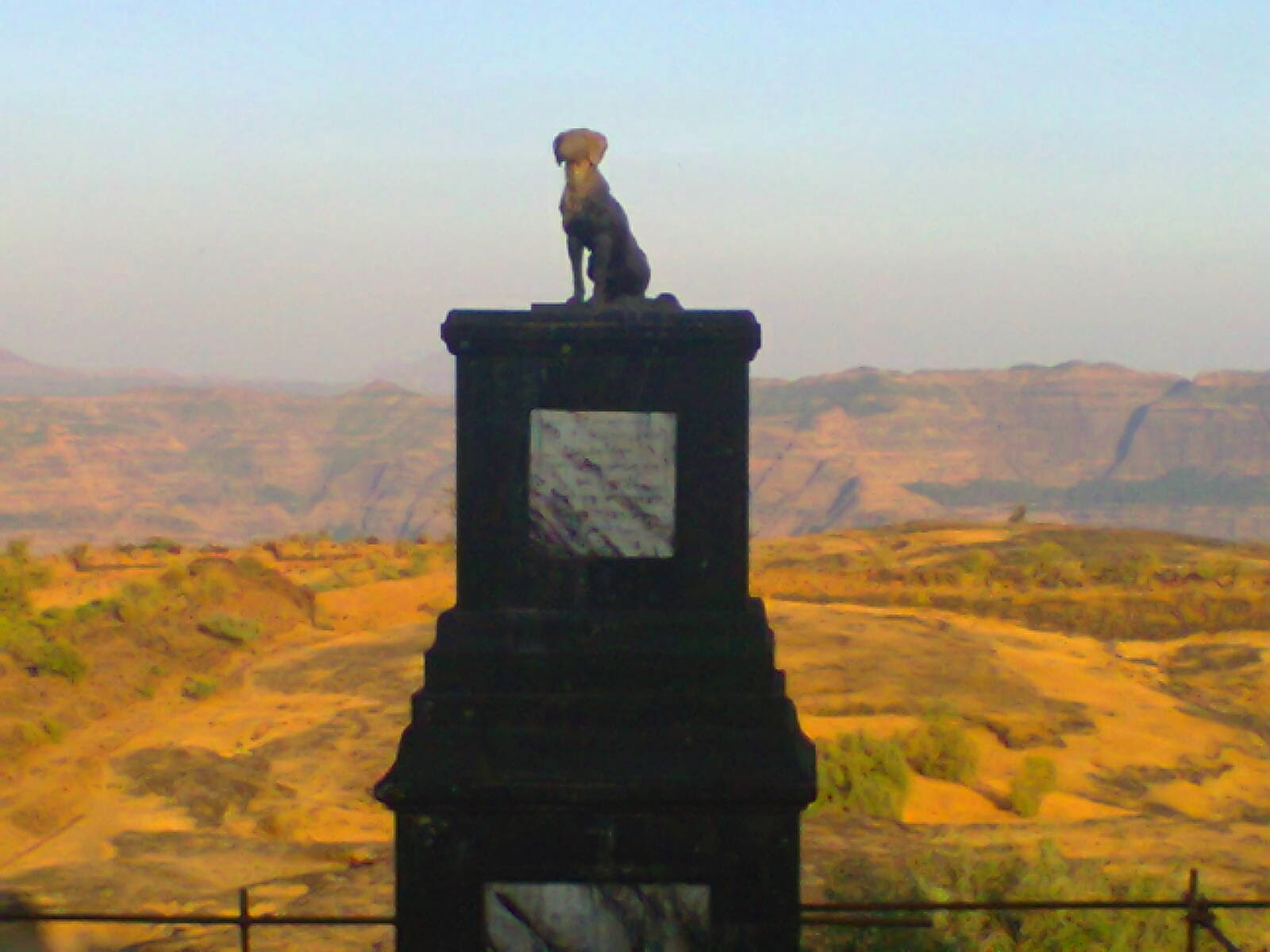 Dog of shivaji