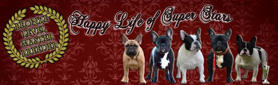 Happy Life of Super Stars French Bulldog Kennel