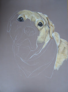 étapes dessin labrador