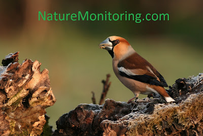 www.naturemonitoring.com