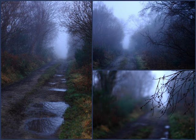 collage of images, foggy road, surrounded by gloomy trees