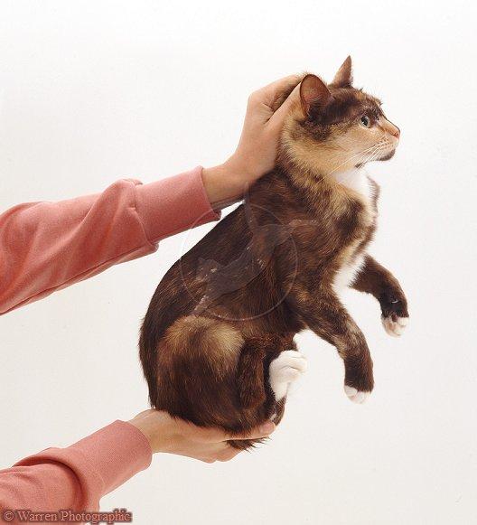 Pinching A Cat S Neck