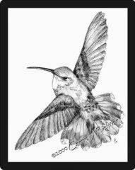 Hummingbird #2