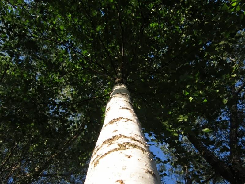 Как деревья могут помочь человеку исцелится