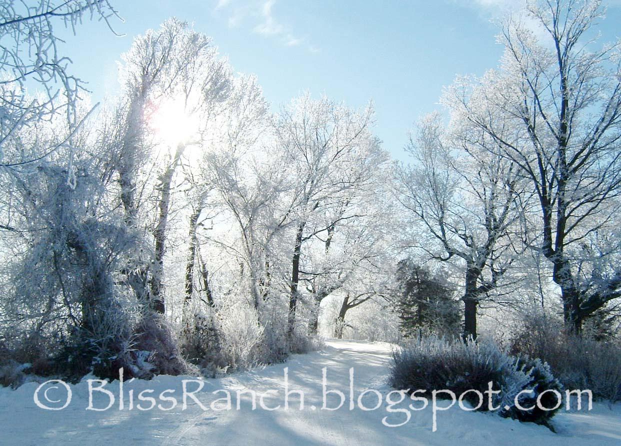 http://3.bp.blogspot.com/-URFXs1YxVIs/UN3T-Uy9XoI/AAAAAAAAESI/aaZu4F45GBE/s1600/Driveway+Christmas+Eve1.jpg