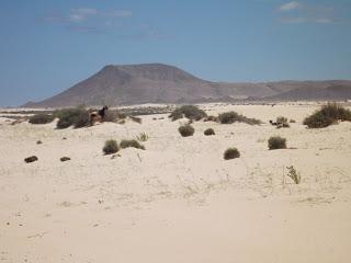 foto playa grandes dunas fuerteventura