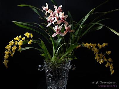 Orquídeas Oncidium e Cymbidium em arranjo floral