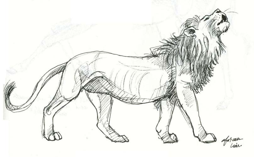 Art By Jeane Nevarez Male Lions