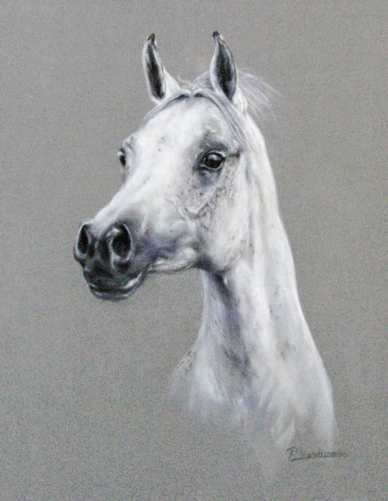 paardenportret, paardenportret in pastel, horse painting, horse painter, pferdemaler, paardenportret in opdracht, equine art, paula hondsmerk , art, horsepainting, paardenschilder, paardenschilderij