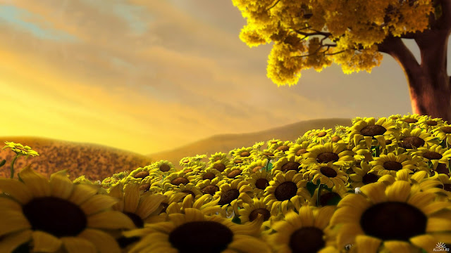 Yellow Beauty Nature HD Wallpaper