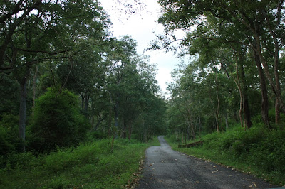 The road from K.Gudi to BR temple, BRT tiger reserve, Karnataka