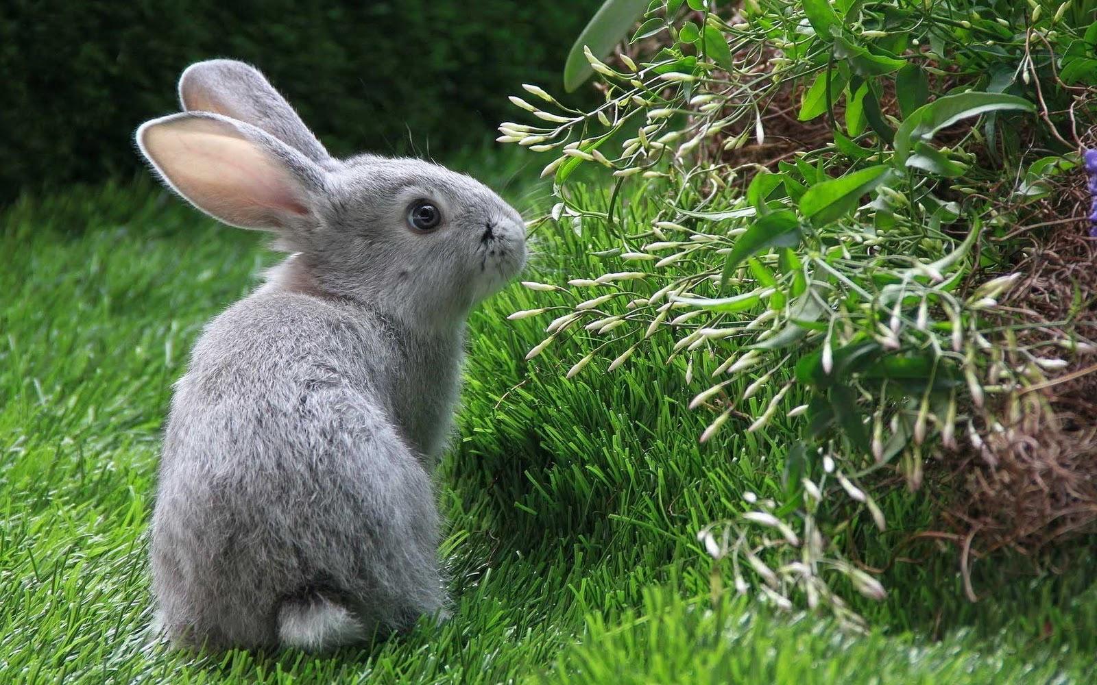 foto met een grijs konijn in de achtertuin