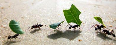 Ants & Partners
