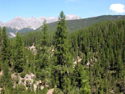 Upaya Konservasi Keanekaragaman Hayati