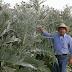 Πέτρος Ζαργάνης, ένας πανέξυπνος αγρότης της Εύβοιας που με πολυκαλλιέργειες έλυσε το οικονομικό του πρόβλημα [εικόνες]