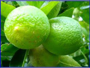 Limões..
