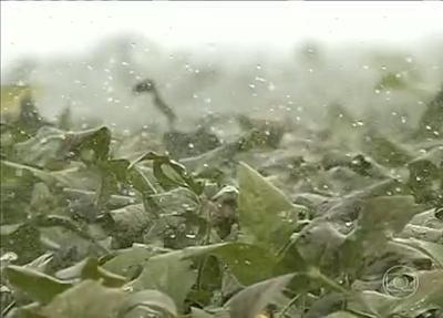 Reportagem: Agricultores de Goiás usam água da chuva para irrigação