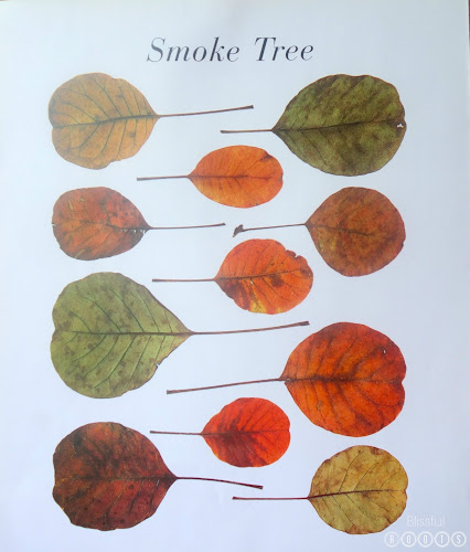 Autumn Leaves by Ken Robbins for Fall Decor @ Blissful Roots