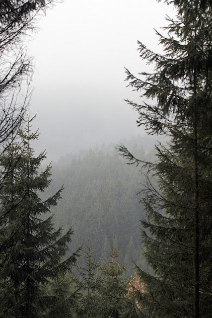 Misty forest in November