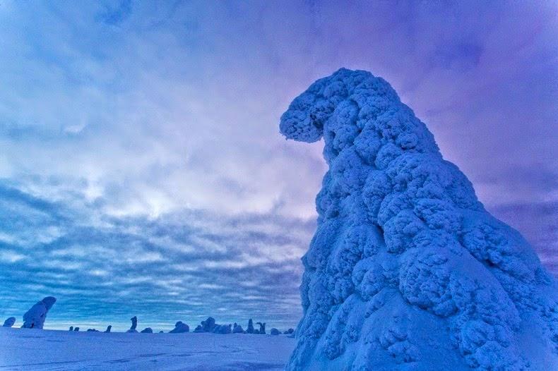 الشتاء في ريسيتنتري الحديقة الوطنية الفنلندية