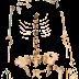 """El ADN humano más antiguo pone """"patas arriba"""" la teoría de la evolución"""
