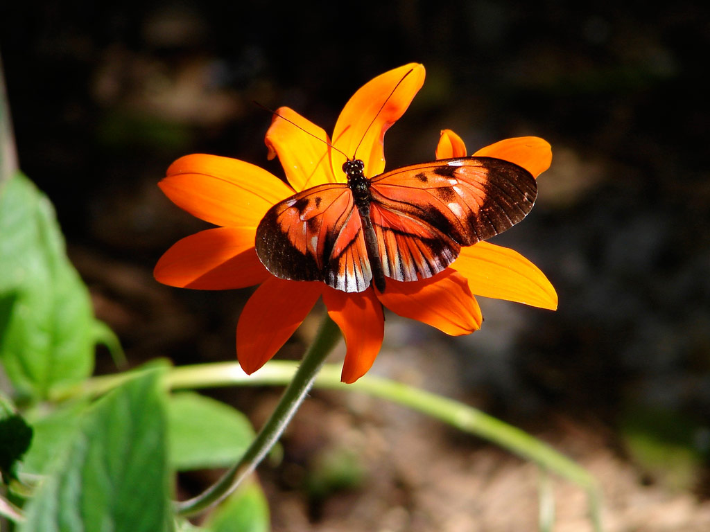 Unique Wallpaper: Exotic Butterfly Wallpapers Of Butterflies