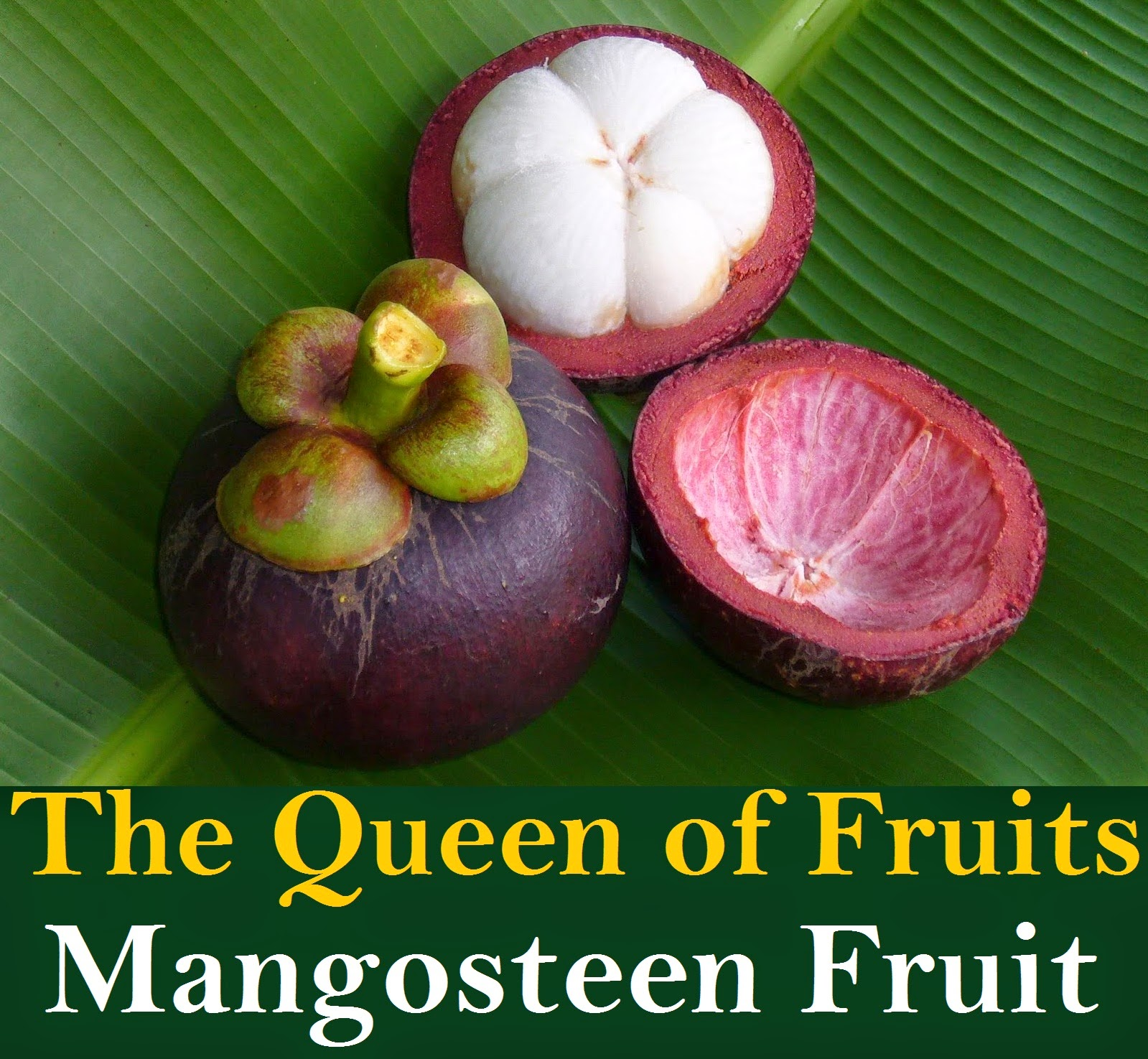 Mangosteen  The Queens Fruit  YouTube