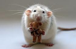 Sonia es la ratona jefe...