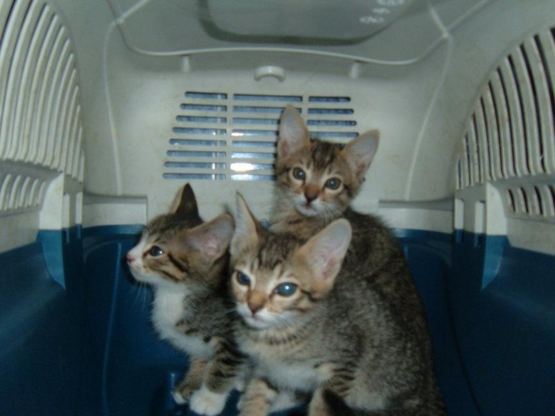 Gli amici di pimpi settembre 2011 - Gattile bagno a ripoli firenze ...
