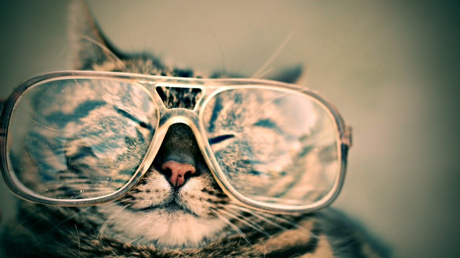 cat in glasses wordly wordly.us expat blog travel living abroad