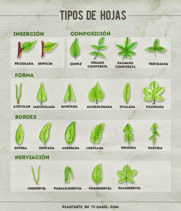 PlantArte en tu Oasis. Paisajismo y naturaleza para todos.: Hortus ...